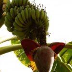 Десерт \»Банановые корабли\»